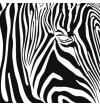 NH40- EYE OF THE ZEBRA